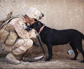 Hund i människans tjänst